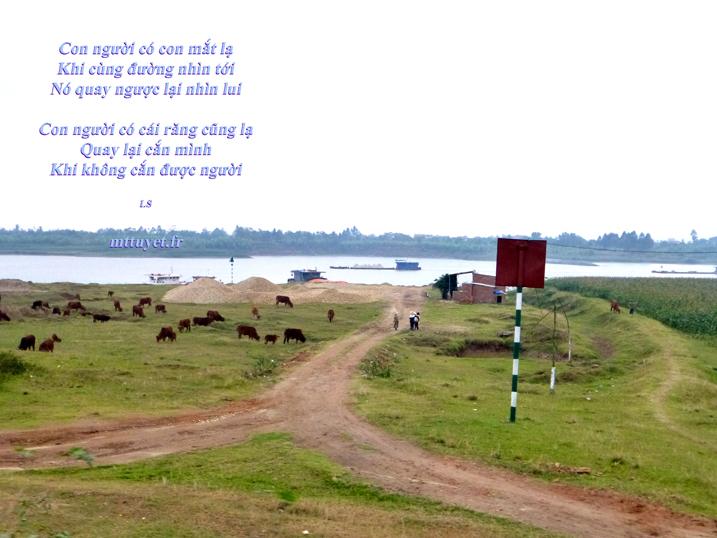 Thơ LS - Mắt Răng - Photo: Mathilde Tuyết Trần - Ven làng Đông Hồ Bắc Ninh 2014