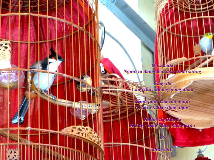 Thơ LS -  Đo sướng, Photo: Mathilde Tuyết Trần, Chim lồng Hà Nội 2014