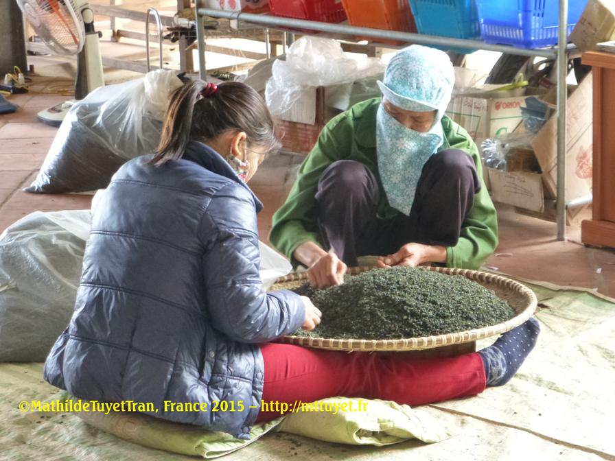 Trier le thé vert à la main et sur les genoux !  Fabrication artisanale du thé vert de Thai Nguyen. Photo: ©Mathilde Tuyet Tran, France2015
