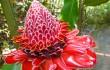Martinique, ảo ảnh một thiên đường