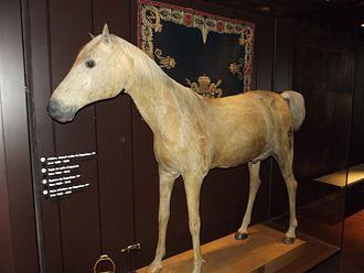 Con ngựa Vizir của Napoleon