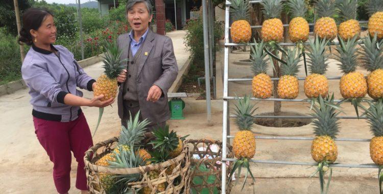 Vinh – Cửa Lò, Nghệ An, sau 20 năm
